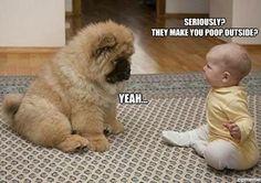 Just think the puppy is sooooo cute!