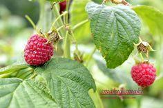 smakuj smaki - przepisy i fotografia kulinarna: Tort czekoladowo-malinowy Strawberry, Fruit, Cake, Fotografia, Pie Cake, The Fruit, Cakes, Strawberries, Cookies