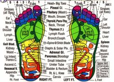 Free Printable Reflexology Charts | Reflexology Chart for Feet ~~~ this is a nice printable color chart ...