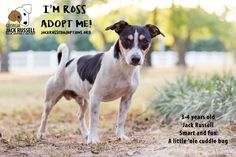 This little man is the well-rounded Terrier package: Funny and active, but laidback and lovable.  #AdoptTerrier