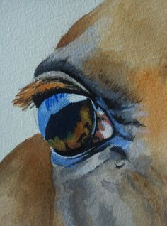 Detail of horse eye