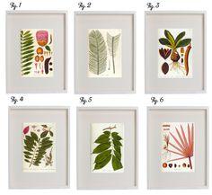 Poppytalk: Best of DIYs | Botanical Prints Downloads