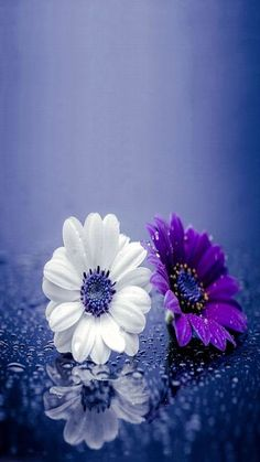 Hd Flowers, Flowers Nature, Amazing Flowers, Pretty Flowers, Spring Flowers, Purple Flowers, Nice Flower, Hd Flower Wallpaper, Beautiful Flowers Wallpapers