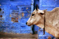 13 de maio dia do Zootecnista   A zootecnia é a ciência que visa desenvolver e aprimorar as potencialidades dos animais domésticos e domesticáveis, com a finalidade de incrementar sua produção como fonte alimentar e outras finalidades.   foto de Pascal Mannaerts Brussels, Brussels, Belgium