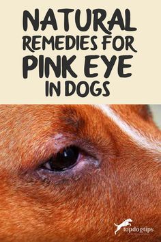 This is an article describing the natural remedies for pink eye in your dog. You will learn when to use over the counter and home remedies. Eye Irritation Remedies, Pink Eye Treatment, Home Remedies, Natural Remedies, Dog Health Tips, Eyes Problems, Dog Eyes
