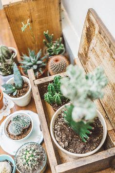 Plus tendance que jamais, les cactus s'invitent dans toutes les pièces de la maison.