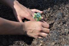 Tratamente naturale din plante pentru protejarea culturilor ecologice de boli si daunatori   StiriAgricole.ro Natural Fertility, Urban Farming, Compost, Organic Gardening, Romani, Twin Cities, Community, Organic Farming, Plant