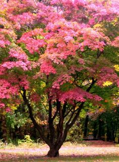 I find it deeply uplifting to see such a beautiful spalsh of colour.