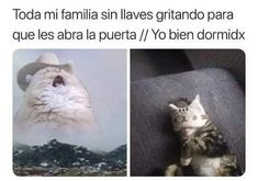 Read memes de michis from the story memes con sabor a awa de uwu by The-Pitz (🦢) with reads. Cute Memes, Funny Memes, Hilarious, Jimin, Pinterest Memes, Kpop Memes, Spanish Memes, Foto Bts, Best Memes