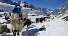 Mount Everest Base Camp Trek With Yaks http://adventuretraveltrek.com/mount-everest-base-camp-trek/