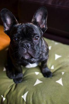 french bulldog...I love you.
