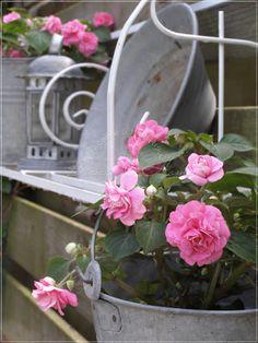 Bizzy @t home: bloemen