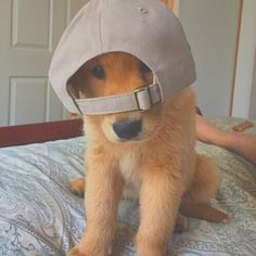Pinterest: AloaYum That dog with a hat is life!