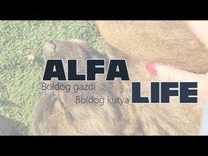 Alfa life - Boldog gazdi, boldog kutya - YouTube