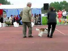 Dog Show 2007-08-03, Machiavelli Pangea, Palangos 2