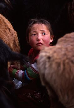 7 year old Aincik is milking sheep. Altai Tavan Bogd National Park, Bayan-Ölgii Aimag, Mongolia. A popular region of the park is the lakes region, which is renowned for its natural beauty, making it a much visited area by tourists and nomadic herders alike. (V)