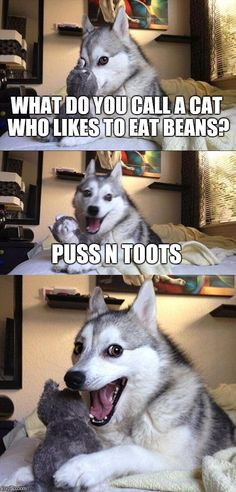 Bad Pun Dog || What do you call a cat who likes to eat beans? Puss N Toots.
