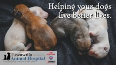 Helping your dogs live better lives. | Tuscawilla Animal Hospital has veterinarians that care about cats and dogs too! Call us today to schedule an appointment. #veterinarymedicine #animalhospital Veterinary Medicine, Veterinarians, Schedule, Life Is Good, Dog Cat, Live, Cats, Animals, Timeline
