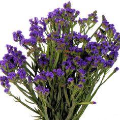 Purple Statice Flower 10 Bunch Bulk