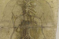 Los cuerpos de Leonardo ven la luz