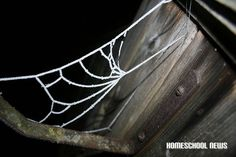 Schnee- und Frost-Impressionen, Spinnennetzt, Spiderweb