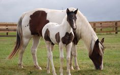 Country Animals: Pictures of Horses — Country Magazine