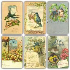 Vintage birds postcards