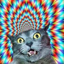trippy cat - Buscar con Google