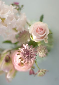 astrantia rose and hyacinth