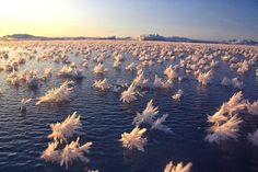 6. Frost Flowers Float Across The Arctic Ocean - 18 Beautiful Frozen Lakes, Oceans And Ponds That Resemble Fine Art