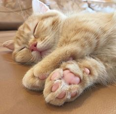 That cute little pink paw🐾😻 Cute Baby Animals, Animals And Pets, Funny Animals, Pretty Cats, Beautiful Cats, Cute Kittens, Cats And Kittens, I Love Cats, Crazy Cats