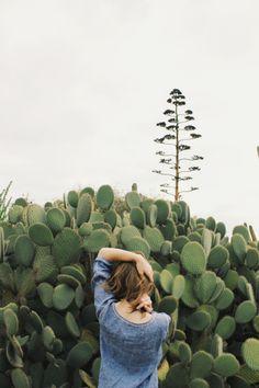 """Me encanta este árbol y no sé ni como se llama. Solo sé que es familia de la aloe vera y que tiene un """"cactus"""" debajo. Parece un espárrago gigante."""