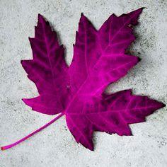 Happy #CanadaDay!