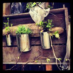 moestuinieren met blik - leuk voor in de plantenkas