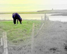 The Green Field My Horse, Horses, Green Fields, Famous Artists, Science Nature, One Pic, Iceland, Nature Photography, Natural