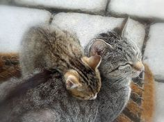 Cat and kitten in BF