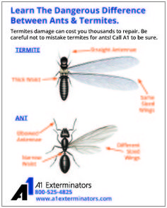 Learn the Difference Between Ants & Termites - http://www.a1exterminators.com/learn-the-difference-between-ants-termites/ - http://www.a1exterminators.com/wp-content/uploads/2016/04/termite-ant-ad-240x300.jpg