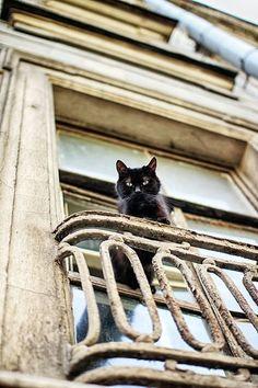 Youshe Me Cat window Animals And Pets, Funny Animals, Cute Animals, Crazy Cat Lady, Crazy Cats, Cat Window, Gatos Cats, Photo Chat, Mundo Animal