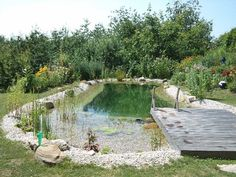 Image result for pool pond natura