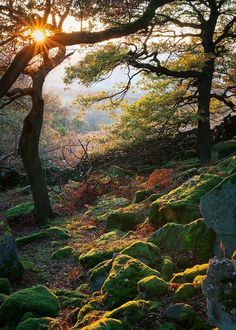 Just before sunset at Gardom's Edge, Peak District National Park near Derbyshire England