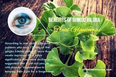 According to one study, glaucoma patients who took 120 mg of the gingko biloba daily for more than 8 weeks improved their vision significantly.