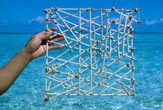 On stick-charts, the sticks represent wave patterns and shells mark the atolls. Marshall Islands, Micronesia, May 1967.