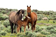 Wild horse familly