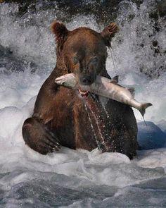 Bear catch salmon too.