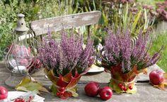 Einfach, aber effektvoll:Die beidenTöpfe mit Besenheide (Calluna) wurden mit dem Herbstlaub des Wilden Weins (Parthenocissus tricuspidata 'Veitchii')undroten Weißdornfrüchten geschmückt