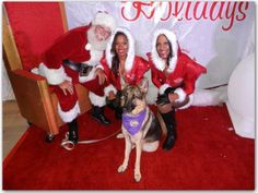 It was a Christmas Tree Trimming contest that Canine Assisted Therapy was involved with that drew Coco to the Hollywood HardRock Cafe in Hollywood, Fl. It was the man in the red that she wanted to get a picture with...