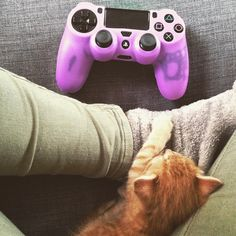 Gaming time!   via tigger_and_zebra on Instagram!