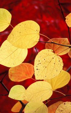 Beautiful fall wallpaper .
