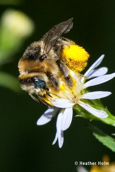 Support Native Bees - Plant Native Plants! Guide to beneficial flowers for bees based on soil types