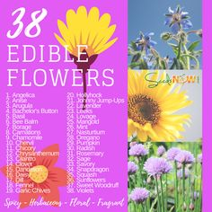 Try growing these 38 beautiful edible flowers in your yard or garden. Not only will you help provide nectar for friendly pollinators in your garden, but you'll have fragrant, and delicious blooms tha. Edible Flowers, Organic Farming, Rice Paper, Chrysanthemum, Pansies, Horticulture, Planting Flowers, Bloom, Herbs